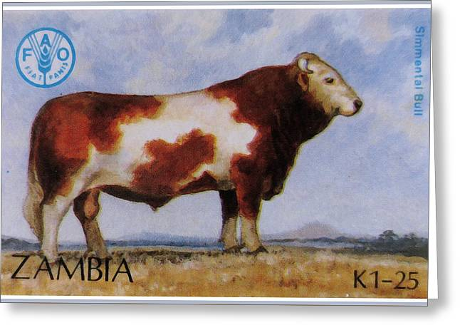 Angus Steer Paintings Greeting Cards - Simmental Bull Greeting Card by Lanjee Chee