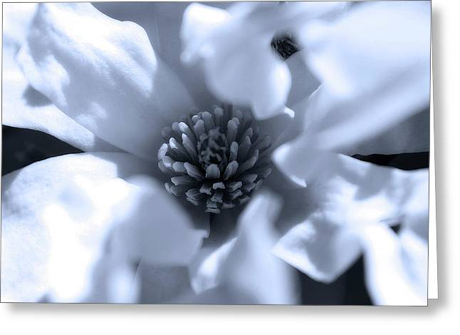 Simple Elegance Greeting Card by Scott Hovind