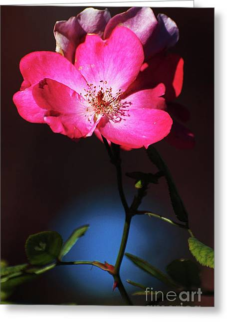 Popular Art Greeting Cards - Simple Pink Flower on Black Background Greeting Card by ArtyZen Studios - ArtyZen Home