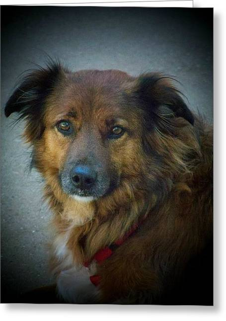 Collie Pics Greeting Cards - Simply Beautiful Greeting Card by Deborah  Montana