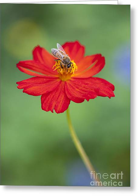 Simply Bee Greeting Card by Tim Gainey