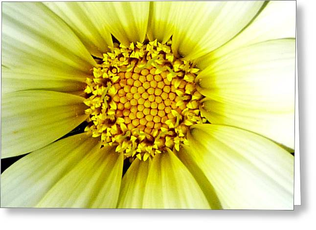 Flower Pyrography Greeting Cards - Simply Daisy Greeting Card by JoAnn SkyWatcher