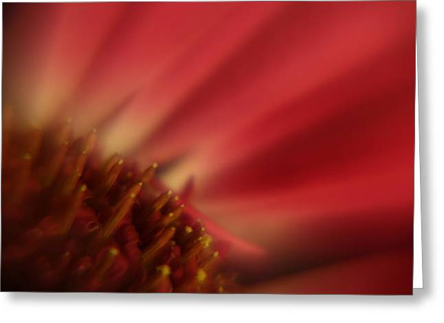 Simply Red Greeting Card by Carol Japp