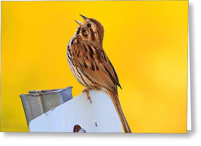 Sparrow Mixed Media Greeting Cards - Sing It Out Greeting Card by Robert Pearson