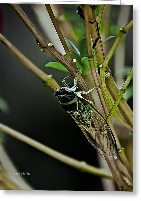 Cicada Greeting Cards - Singing Cicada Greeting Card by DigiArt Diaries by Vicky B Fuller