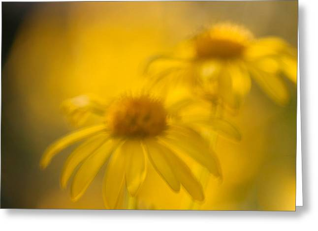 Evening Lights Greeting Cards - Singing In The Sun Greeting Card by Constance Fein Harding