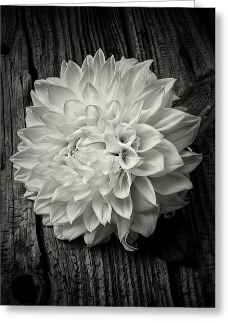 Large White Flower Close Up Greeting Cards - Single Dahlia In Black and White Greeting Card by Garry Gay