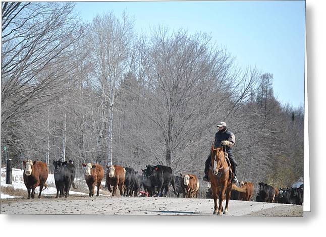Cattle Run Greeting Cards - Single File Greeting Card by Lisa Young