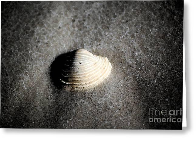 Florida Greeting Cards - Single Orange White Sea Shell Macro on Fine Sand Fresco Digital Art Greeting Card by Shawn O