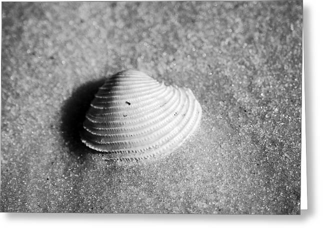 Single Orange White Sea Shell Macro On Fine Sand Square Format Black And White Greeting Card by Shawn O'Brien