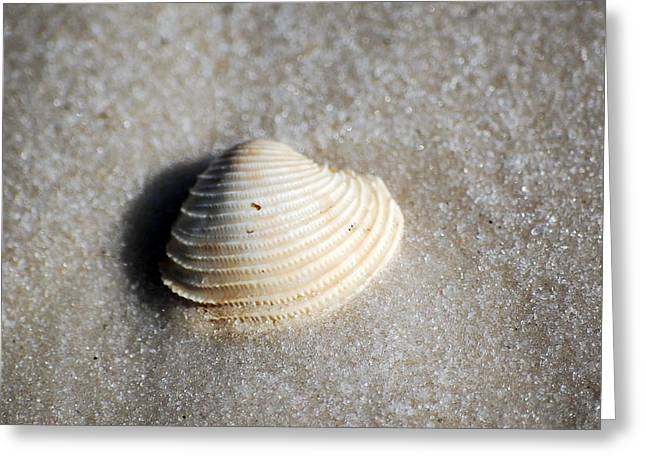 Puerto Rico Greeting Cards - Single Orange White Sea Shell Macro on Fine Sand Square Format Greeting Card by Shawn O