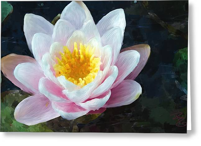 Water Lilly Greeting Cards - Single pink waterlily Greeting Card by Debra Baldwin