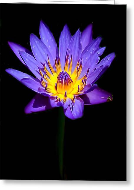 Bloosom Greeting Cards - Single Purple Water Lily Greeting Card by Pamela Walton