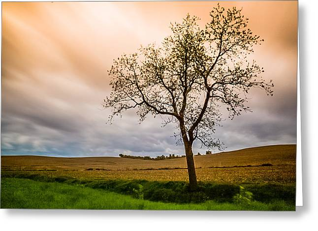 Field. Cloud Greeting Cards - Single Tree Greeting Card by Kristie Kuo