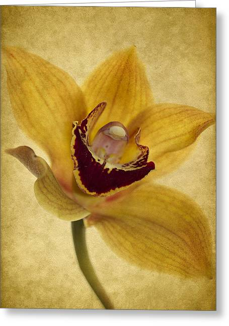 Orchids Greeting Cards - Singular Sensation Greeting Card by Rebecca Cozart