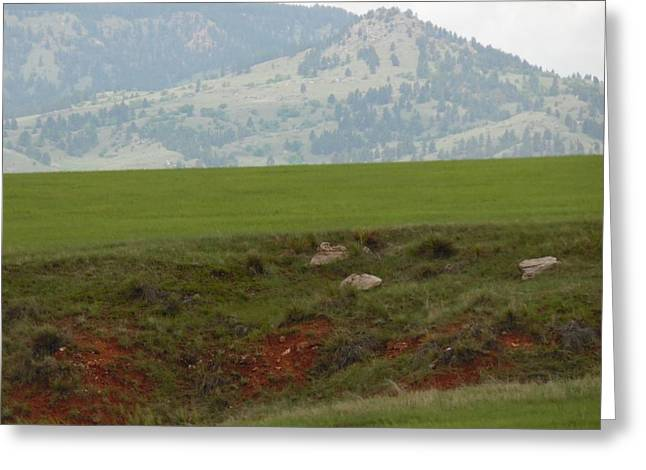 Sink Hole Greeting Cards - Sink hole in pasture Greeting Card by Pamela Pursel