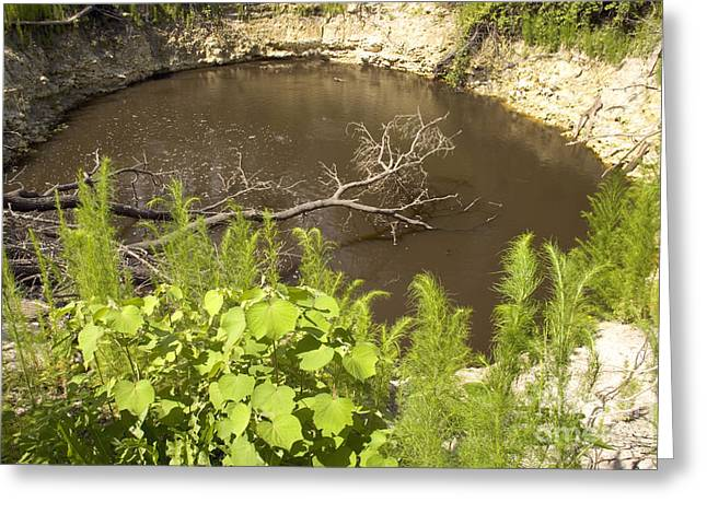 Cenote Greeting Cards - Sinkhole, Florida Greeting Card by Inga Spence
