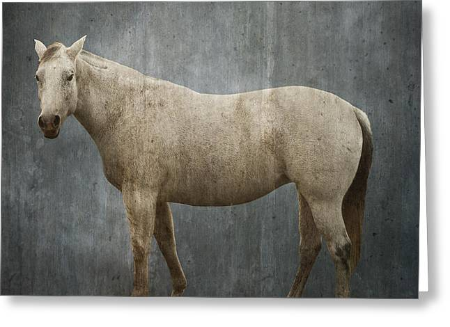 Beautiful Equine Photos Fine Art Greeting Cards - Sis, A Cowboys Horse Greeting Card by Greg Noblin