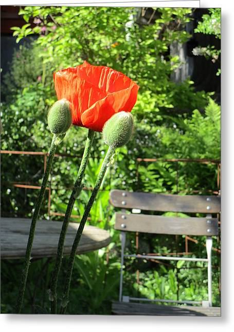 Capsule Greeting Cards - Sit and Enjoy Greeting Card by Rosita Larsson