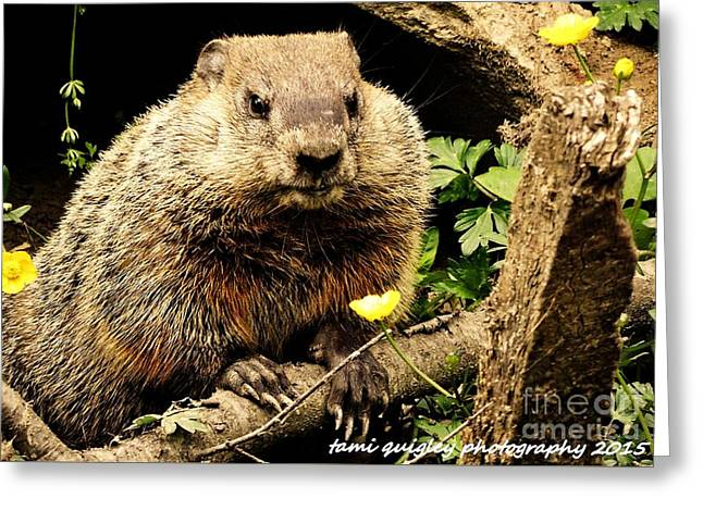 Sittin Among The Buttercups Greeting Card by Tami Quigley