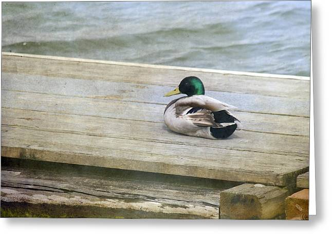 Oregon Ducks Greeting Cards - Sittin On the Dock Greeting Card by Rebecca Cozart
