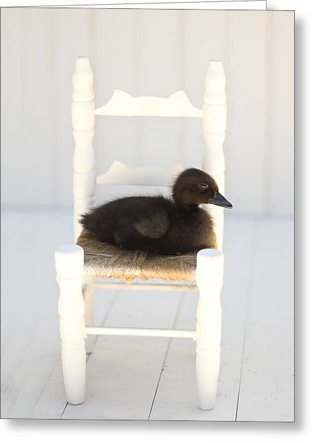 Decor Photography Greeting Cards - Sitting Duck Greeting Card by Amy Tyler