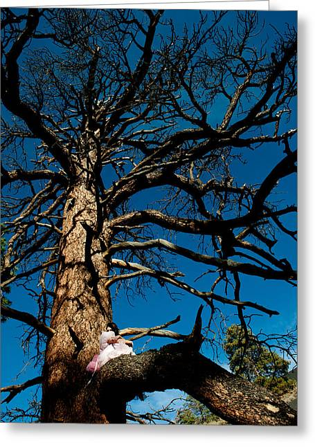 Woman In A Dress Greeting Cards - Sitting In Tree 2 Greeting Card by Scott Sawyer