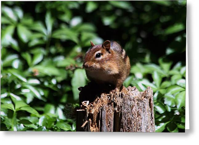 Little Critters Greeting Cards - Sitting on a Post Greeting Card by Karol  Livote