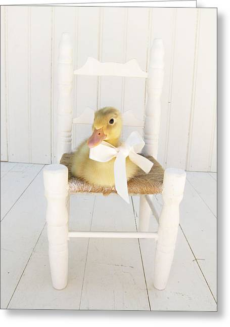 Ducklings Greeting Cards - Sitting Pretty Greeting Card by Amy Tyler