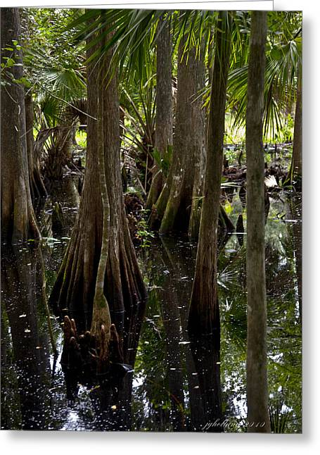 Florida Swamp Reflection Greeting Cards - Six Mile Cypress Swamp Florida Greeting Card by Joseph G Holland