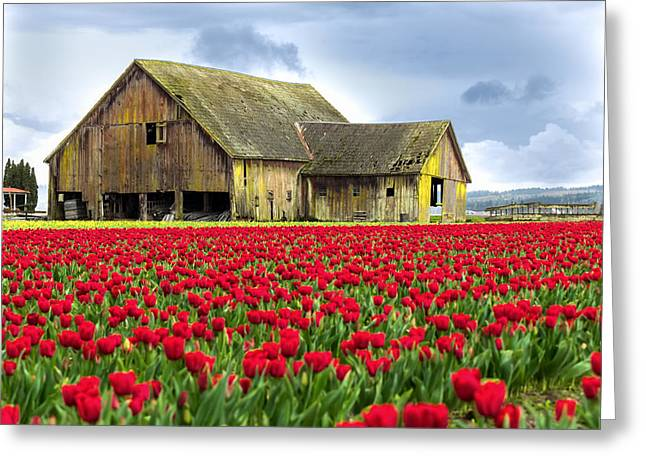 Storm Prints Photographs Greeting Cards - Skagit Valley Barn Greeting Card by Kyle Wasielewski