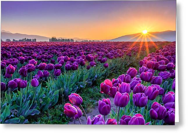 Recently Sold -  - Harvest Art Greeting Cards - Skagit Valley Sunrise Greeting Card by Kyle Wasielewski