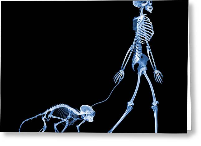 Wildlife Imagery Greeting Cards - Skeleton Walking A Marmoset, X-ray Greeting Card by D. Roberts