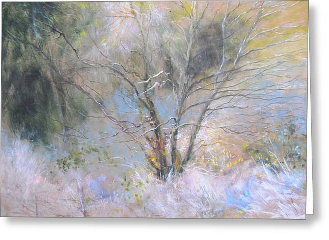 Sketch Of Halation Effect Through Trees Greeting Card by Harry Robertson