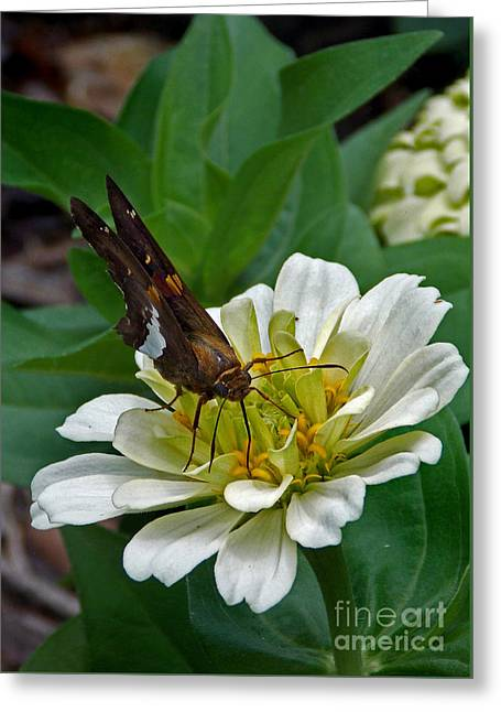 Spider And Fly Greeting Cards - Skipper Two Greeting Card by Skip Willits