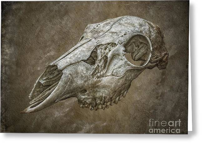 Ghastly Greeting Cards - Skull on Brown Texture Greeting Card by Randy Steele