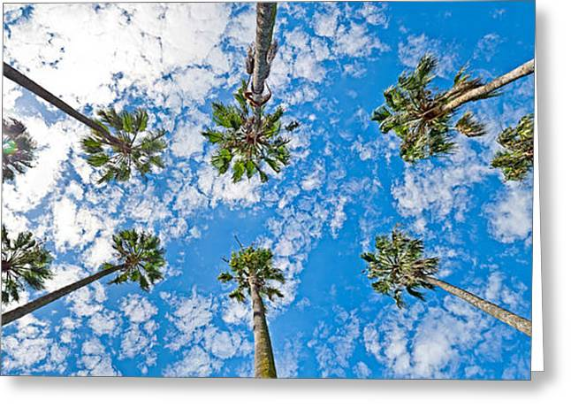 Looking Up Greeting Cards - Skyward Palms Greeting Card by Az Jackson