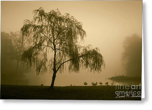 Warm Tones Greeting Cards - Slater Park Landscape No. 1 Greeting Card by David Gordon