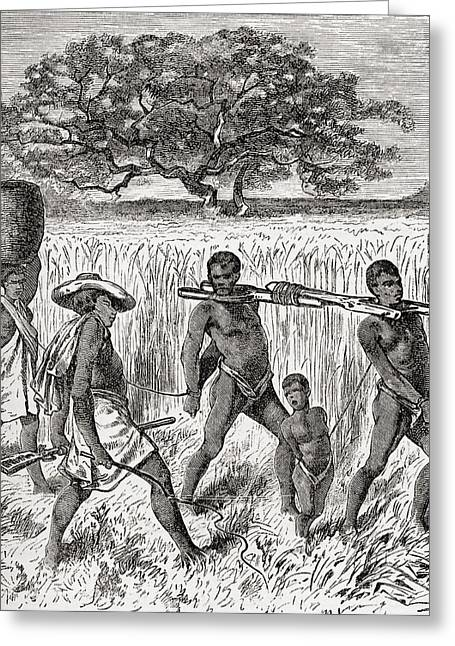 Enslave Greeting Cards - Slave Driving In Africa In The 19th Greeting Card by Ken Welsh