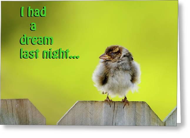 Sleeping Baby Sparrow Greeting Card by Betty LaRue