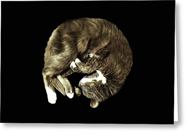 Curled Up Greeting Cards - Shsssh Sleeping Greeting Card by Diana Angstadt