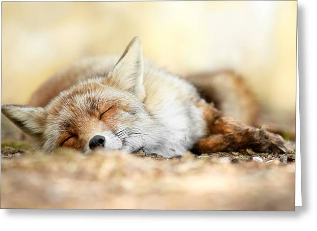 Sleepy Greeting Cards - Sleeping Beauty -Red fox in rest Greeting Card by Roeselien Raimond