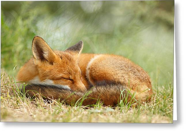 Sleeping Cutie - Red Fox In The Grass Greeting Card by Roeselien Raimond