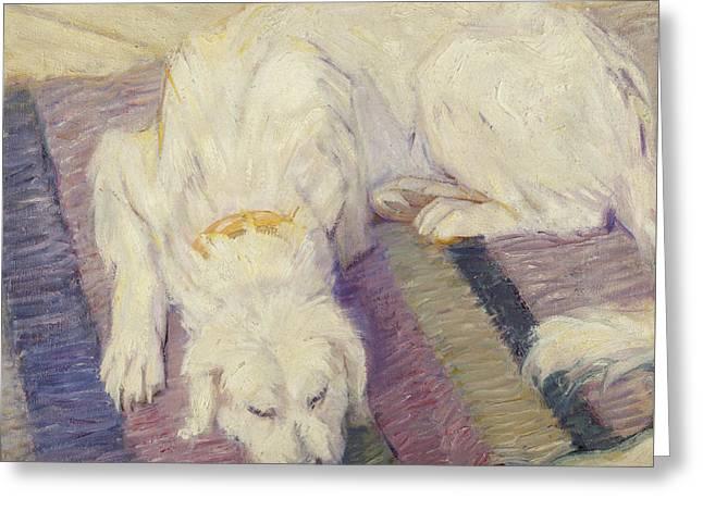 Sleeping Dog Greeting Card by Franz Marc