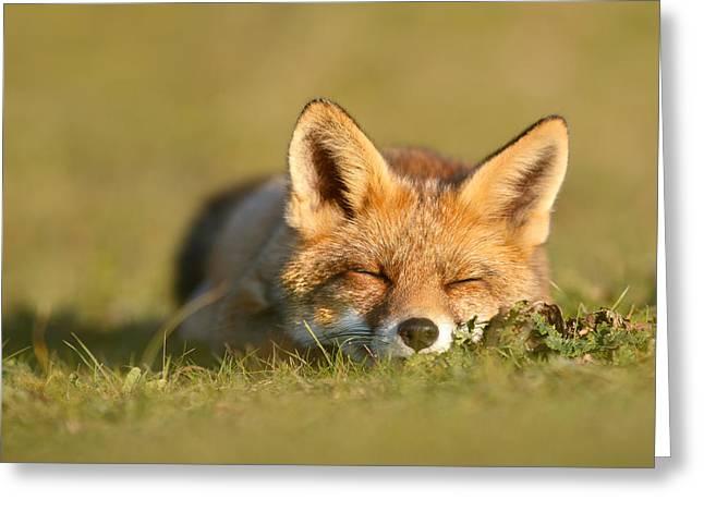 Sleeping Fox Kit Greeting Card by Roeselien Raimond