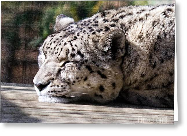 Jaguars Greeting Cards - Sleeping Panther Greeting Card by Terry Weaver
