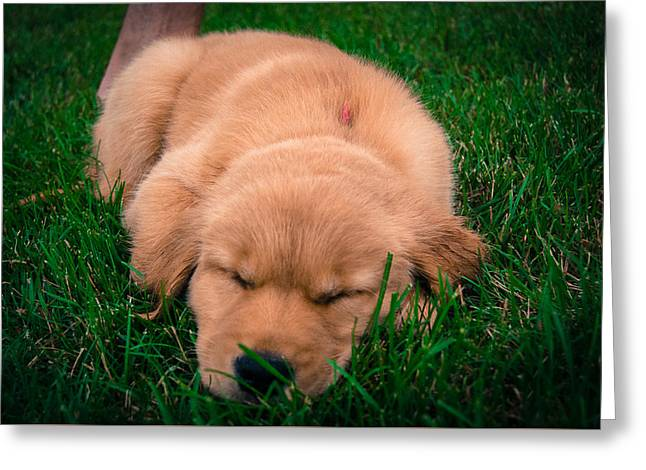 Puppies Photographs Greeting Cards - Sleeping Puppy Greeting Card by William Wight