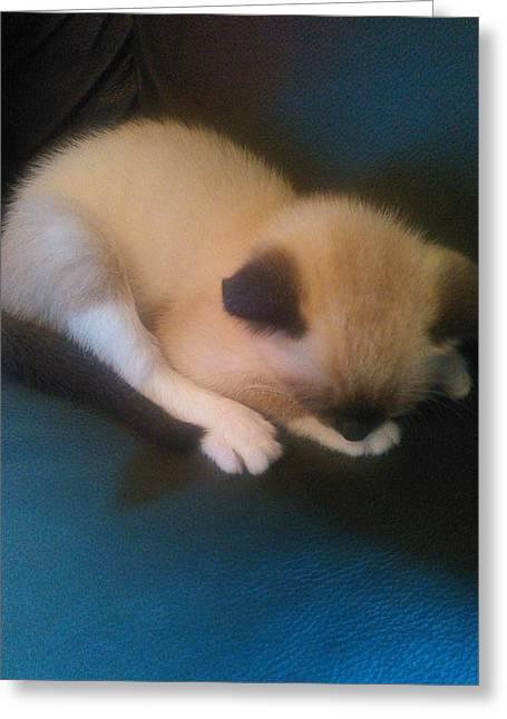 Becky Greeting Cards - Sleeping Siamese Kitten Greeting Card by Becky Burt