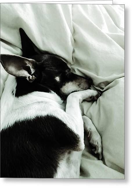 Recently Sold -  - Puppies Digital Greeting Cards - Sleeping Squib Greeting Card by Heather Joyce Morrill