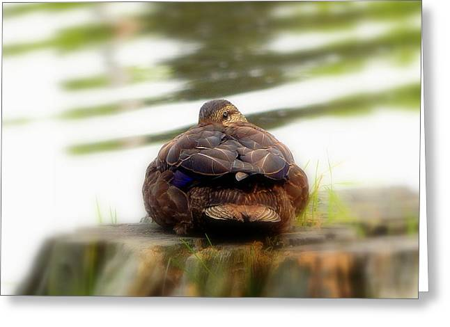 Aquatic Greeting Cards - Sleeping with one eye open Greeting Card by Karen Cook